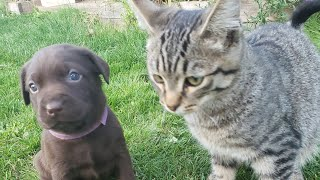 Cute Puppies VS Cute Cats