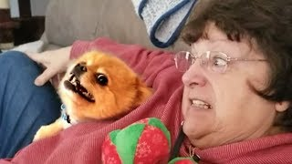 More Funny Dog Videos!! 🐶