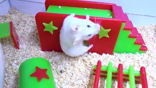 Cute and Funny Moments of the HAMSTERS 🐹 Behind The Scenes