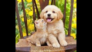 Cute Pets, dogs and cats Videos- And Funny cats & Funny Animals Compilation, Lustige Tiervideos #59