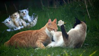 Real cats fight | AWW – Funny And Cute Cats Compilation | Pet Paws Video 2020