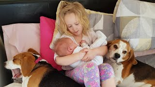 Big Sister and Cute Dogs Taking Care of Newborn Baby