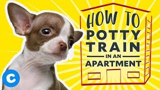 How to Potty Train a Puppy in an Apartment | Chewy