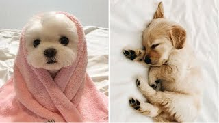 Cutest Puppies Doing Funny Things 2020 ♥ Cute Baby Dogs #1