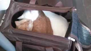 Cute cats groom each other in a cat carrier