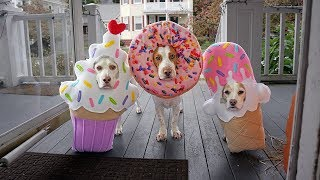 Halloween Dog Trick or Treat Surprise! Funny Dogs Maymo, Penny & Potpie