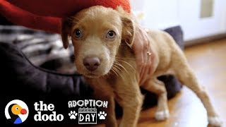 Adorable Puppy Sisters Get Adopted by Woman And Her Best Friend | The Dodo Adoption Day