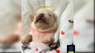 funny Dogs videos try not to laugh impossible clean #14