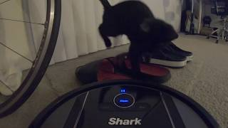 Funny Cat vs Robotic Vacuum #cats #trynottolaugh #petsvstechnology