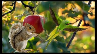 Squirrel Vs Parrot real life Fight- wild life funny moment