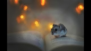 Funny hamsters Videos Compilation-Cutest Moments of the animals