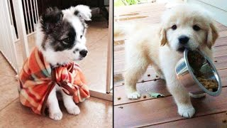 Cutest Funniest Puppies – Baby Animals And Baby Dogs   Awesome Funny Pet Animals Videos Compilation