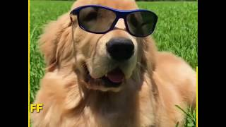 cute dog – ♥cute puppies doing funny things 2020♥  funny dogs puppy The Coolest Fluff Out There