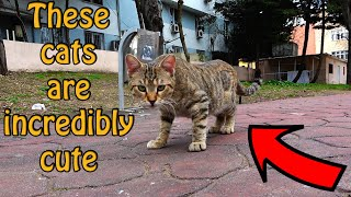 Five Adult Cats Eating Food   Angry Cat   Cute Cats