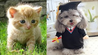 Cute Baby Animals | Funny Cats and Dogs Videos Compilation 2020 part 14