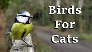 Videos For Cats To Watch – AWESOME One Hour of Birds Coming and Going