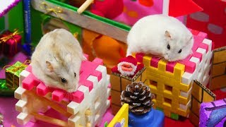 Cute Three Hamsters Toto Mochi And Chip Go To The Zoo And Play Funny Game