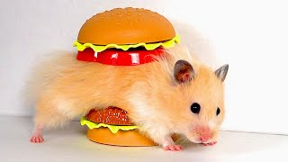 GIANT Burger Maze for Hamster