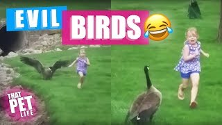 Birds Are Evil | Try Not to Laugh Challenge – Funny Animal Compilation