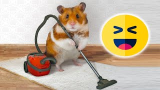 Funny hamsters 2020, ridiculous fails. New funny video with hamsters, funny moments