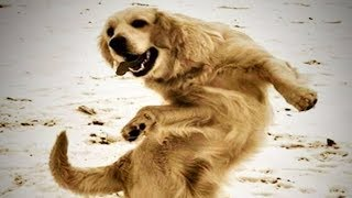 Dancing Dogs 😍🐶 Cute Dogs Dancing (Part 1) [Funny Pets]