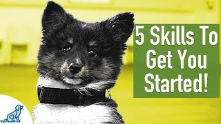 8 Week Old Puppy Training – 5 Exercises To Get You Started!
