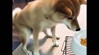 Super Happy Dogs | Funny Dogs Video Compilation 2020
