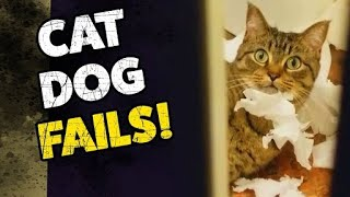 STOP !!! Funny Cats 😻 Dogs ♥ Fails Compilation ♥ 😆