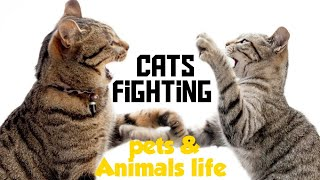 Just a Friendly Fight 😂-Funny Cats Compilation-Pets and Animals Life ❤