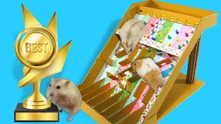 Marble Race For Four Cute Hamsters- Who Is The Best?