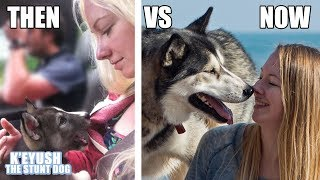 My Husky: Puppy Vs Adult Cute Funny Comparison