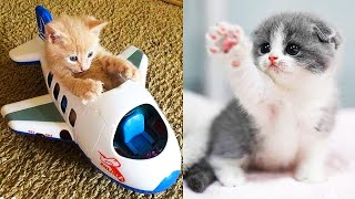Baby Cats – Cute and Funny Cat Videos Compilation | Reaction Tik Tok
