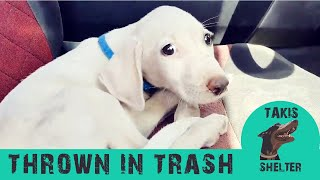 This puppy was thrown in the trash but his luck was about to change – Samu – Takis Shelter