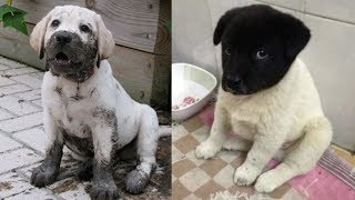 Puppies And Dogs Funny Videos – Cute And Funny Dog Videos Compilation   Baby Dogs – Baby Animals