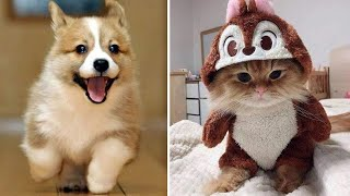 Cutest Baby Dog and Cat – Cute and Funny Dog Videos Compilation #7