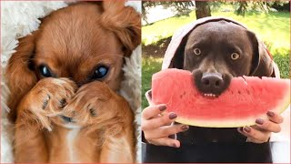 Cute & Funny Dog Videos 🐶 | Best Pet Videos Compilation #2