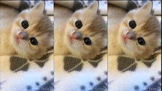 Funny cute cats barking as human voice-Funny cat Videos 2020#4