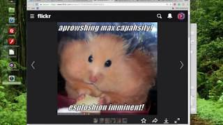 Funny Hamsters, Care, Cages and Supplies