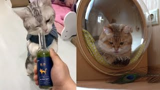 🥀 Aww – Funny and Cute Animals Compilation 🥀 #7 Funy And Cute Cats