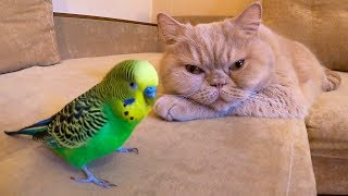 Funny bird loves a cat named Marsik😍😊