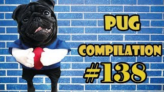 Funny Dogs but only Pug Videos | Pug Compilation 139 – InstaPug
