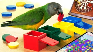 Funny Parrot Tricks – Funny Bird Videos – Cute Parrots & Birds Video   Funny Birds Doing Tricks