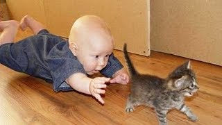 Cute is Not Enough – Funny Cats and Dogs Compilation #43