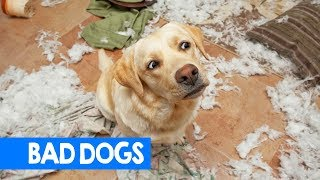Best Bad Dog Moments 2018! Try Not To Laugh: Cute & Funny Pet Reactions