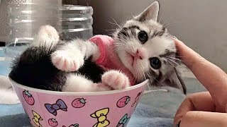 💗Aww – Funny and Cute Dog and Cat Compilation 2020💗 #51 – CuteVN