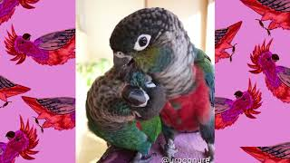 Cute and funny parrots compilation #4 – 2019