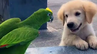 Cutest Golden Puppy and Parrot Duo To Make Your Day