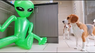 Pranking my Dogs with an Inflatable Alien : Funny Dogs Louie & Marie