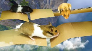 New Hamster race DIY – Hamster House Maze !! Obstacle course by Life of Pets Hamham