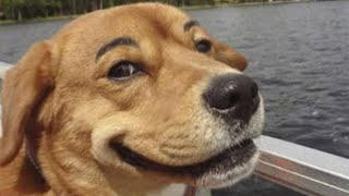 Funny Animals Are Played With People. Cute Cats And Funny Dogs. Try Not to Laugh